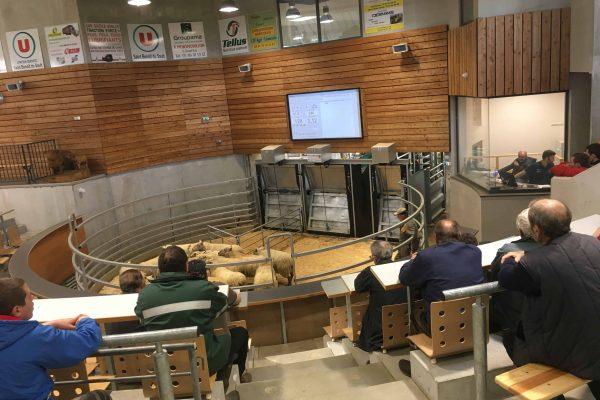 Tournage d'images vidéo en vue de la réalisation d'un film de présentation pour la chambre d'agriculture de la vienne